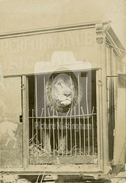 Goose Fair, Market Place , Sideshows, Lion, 1900 ?