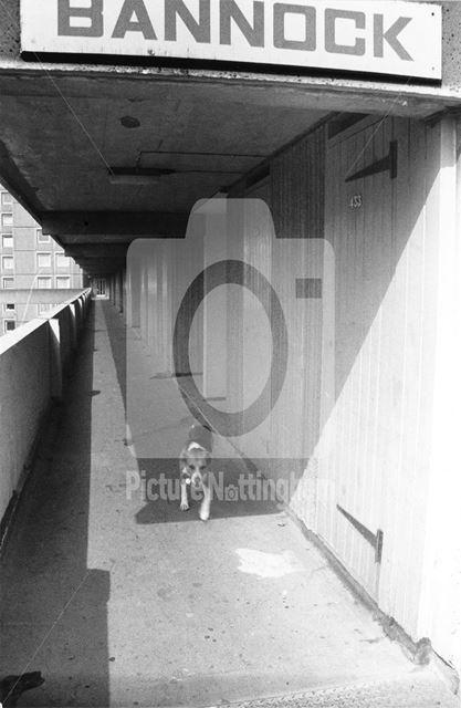 Dog taking itself for a walk, 'Bannock' block access walkway - Basford Flats - Percy Street