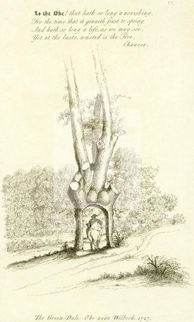 Green Dale Oak, Sherwood Forest, Welbeck Abbey, 1727
