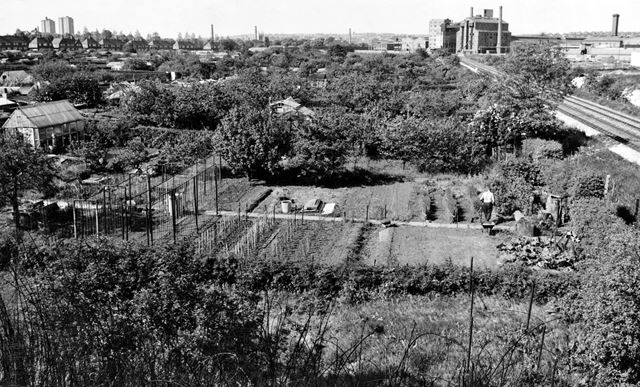 Allotments, Wilkinson Street, Basford