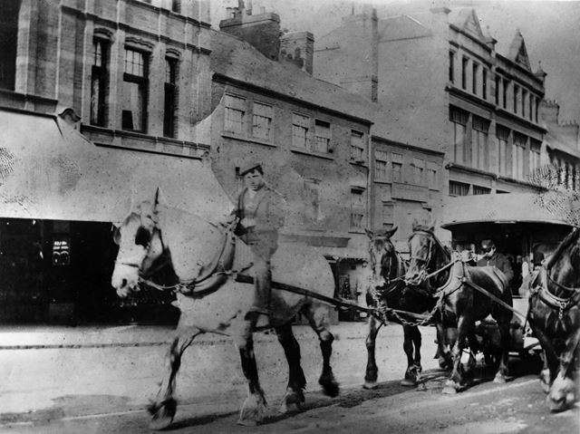 A large cock horse pulling a horse tram up Derby Road