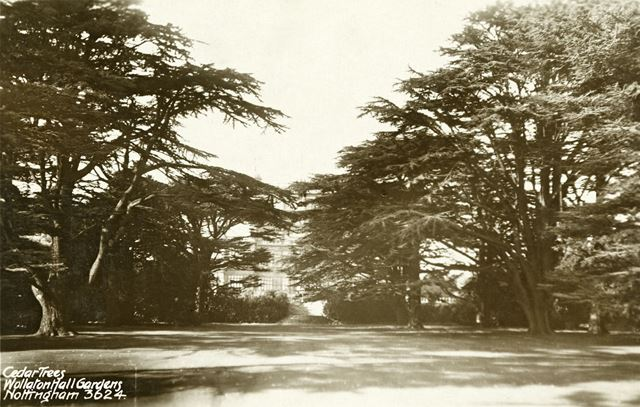 Wollaton Hall - Cedar Trees in the South-East gardens
