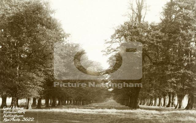 Wollaton Hall - Lime Tree Avenue