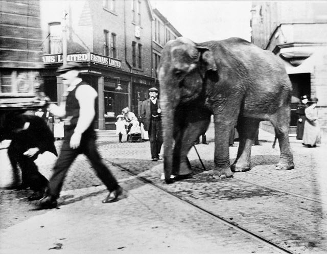 The Wakes, Bulwell - showing an elephant from one of the menagerie sideshows