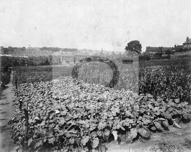 WW1 Food Production, Milner Road, Sherwood, Nottingham, c 1918
