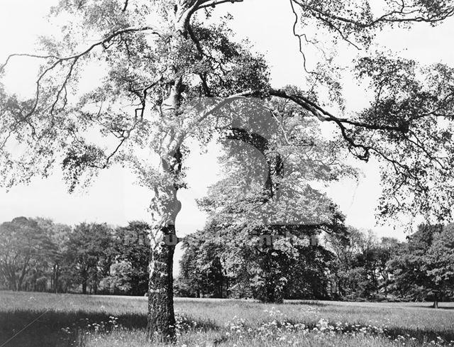 Grounds of Bulwell Hall, Bulwell Hall Park, Bulwell