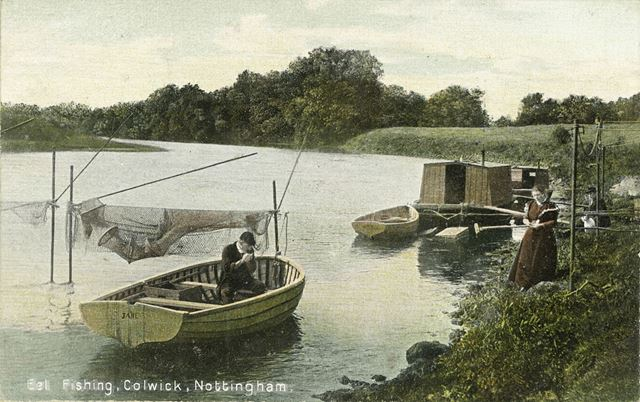 Eel Fishing, Colwick, c 1907