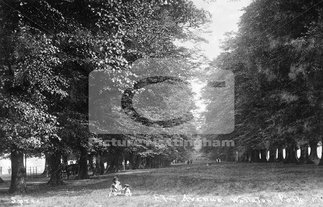 Lime Tree Avenue, Wollaton Park, Wollaton, Nottingham, c 1925